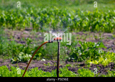 Modern device of irrigation garden. Irrigation system - technique of watering in the garden. - Stock Photo