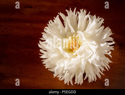 Fluffy white dahlia on a wooden background. - Stock Photo