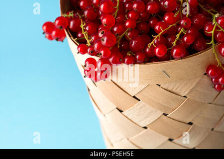 Woman hand holding wooden basket with red currants on blue background. Summer harvest. Healthy eating concept - Stock Photo