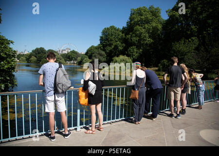 Temperatures reach 30 degrees celsius in St James Park during the first Summer heatwave of the year on 26th June 2018 in central London, England, United Kingdom. - Stock Photo