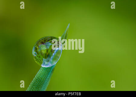 Exciting macro of a drop on green leaf. Blurred background - Stock Photo