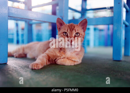 A street cat under the table in a cafe in Patmos, greece - Stock Photo