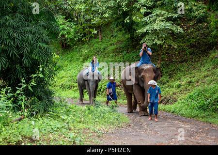 People riding Asian elephants (Elephas maximus) in jungle trail, Thai Elephant Home elephant farm, Keudchang Maetang, Chiang Mai, Thailand - Stock Photo