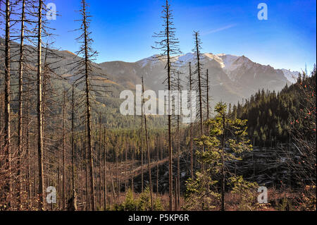 Beautiful mountain landscape in the High Tatras, Poland. Sun illuminates bare conifer trees with snowy peaks and a blue sky background - Stock Photo