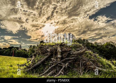 HDR Image of Forest Trash under A Dramatic Sky in Upstate New York - Stock Photo