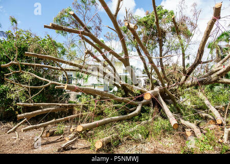 Naples Florida Crayton Road Hurricane Irma wind damage destruction aftermath fallen trees removal storm disaster recovery cleanup front yard - Stock Photo