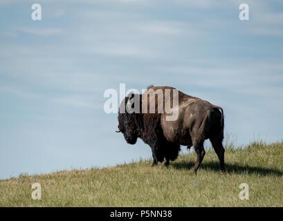 Animals of Badlands National Park - Stock Photo