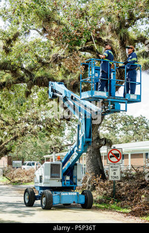 Florida LaBelle after Hurricane Irma damage destruction aftermath disaster recovery relief cleanup recovery live oak tree Hispanic man Genie Boom Lift - Stock Photo