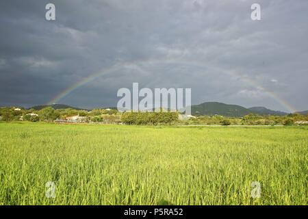 Pla de Manacor.Mallorca.Islas Baleares. España. - Stock Photo