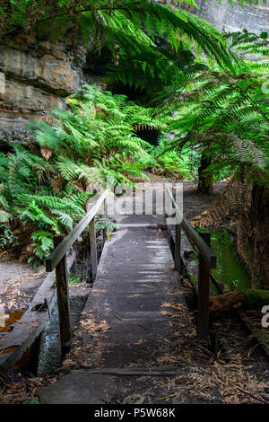 The ferns and canyon walls at the Lithgow Glowworm tunnel in the Blue Mountains New South Wales Australia on 14th June 2018