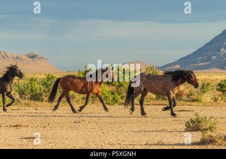 Wild Horses in the Utah Desert - Stock Photo