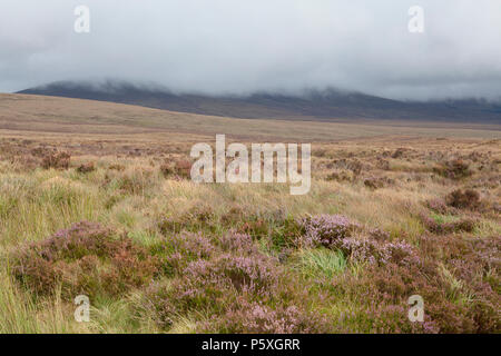 The wild heather clad peat landscapes of the Wicklow Mountains in Ireland Stock Photo