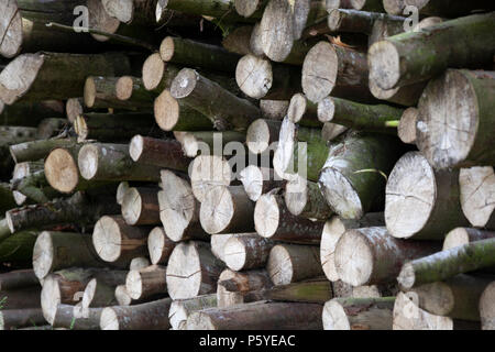 Stack of chopped wood - Stock Photo