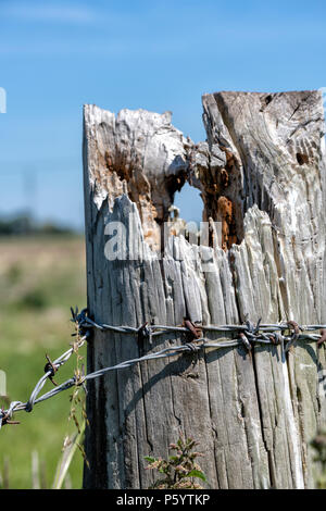 Old fence post with barbed wire wrapped around it - Stock Photo