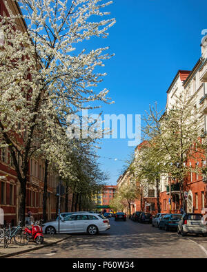 Berlin Prenzlauer Berg, Gneiststraße street view in spring with old gabled apartment buildings and blossoms on trees - Stock Photo