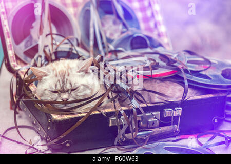 the cat music lover lies in a suitcase with music reels - Stock Photo