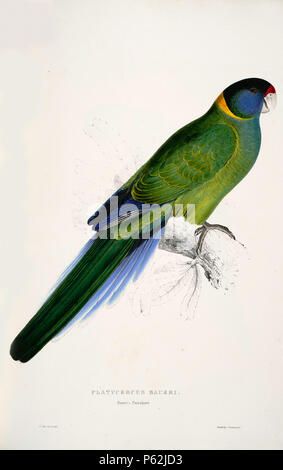 N/A. Barnardius zonarius English: A painting of an jpg Australian Ringneck (originally captioned 'Platycercus baueri. Bauer's Parrakeet.' by Edward Lear 1812-1888. This subspecies Barnardius zonarius semitorquatus is also known as the Twenty-eight Parrot. 28 August 2008, 04:34:00.   Edward Lear  (1812–1888)       Alternative names Derry Down Derry; Eduard Liri; Entouarnt Lar; Eduard Lir; Lear; lear e  Description English artist, author and poet  Date of birth/death 12 May 1812 29 January 1888  Location of birth/death English: Holloway, London, England.  English: Sanremo, Italy.  Authority cont - Stock Photo