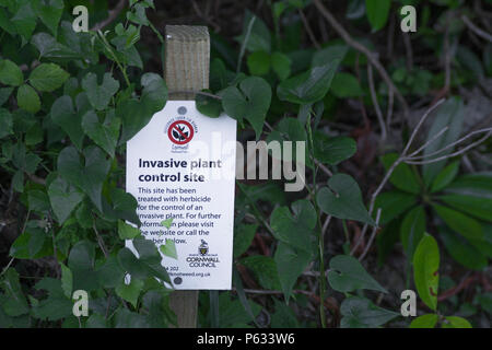 Sign warning of invasive plant control area (Japanese knotweed). - Stock Photo