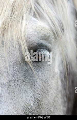 Close-up of the eye of a white horse. - Stock Photo