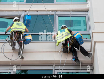 Window cleaners on ropes and suction grips outside an office window - Stock Photo