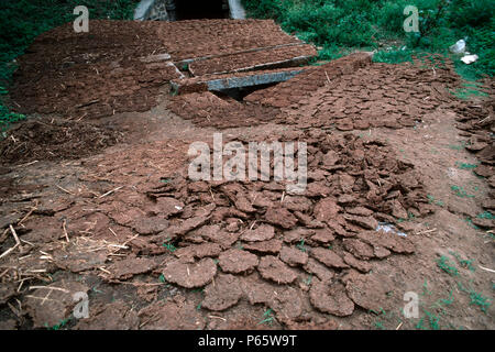 Cow dung drying in sun to make fuel on side of railway embankment, Bangalore, India - Stock Photo