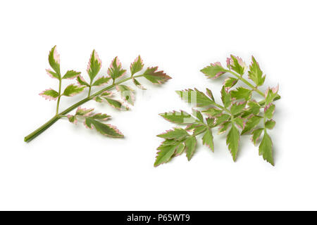 Fresh raw Japanese parsley, Oenanthe javanica Flamingo, isolated on white background - Stock Photo