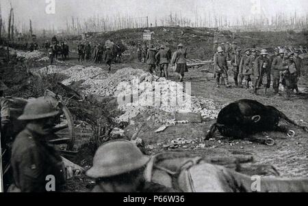 Dead horse is passed by British soldiers and captured German prisoners of war at Flanders, Belgium 1917 - Stock Photo