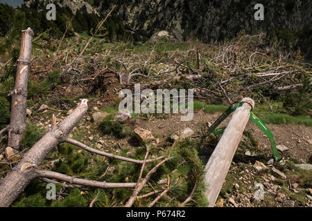 Damage on the slopes above the Vall de Nuria caused by winter avalanches knocking down everything in their path including pine trees and walk signs, P - Stock Photo