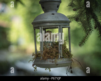Closeup of a fairy figure sitting in a lantern that's hanging from a tree in a garden. - Stock Photo