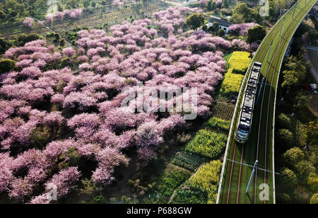 (180628) -- BEIJING, June 28, 2018 (Xinhua) -- A tramcar runs past begonia flowers in Suzhou, east China's Jiangsu Province, March 28, 2018. Comprehensive progress has been made since the report delivered at the 18th National Congress of the Communist Party of China (CPC) in 2012 included ecological development as a major task in the country's overall plan and proposed building a 'beautiful China' as a grand goal.  (Xinhua/Xu Zhiqiang) (wyo)(zt) - Stock Photo