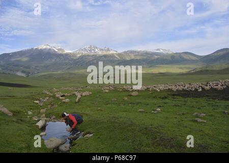 June 27, 2018 - Budgam, Jammu And Kashmir, India - Sheep