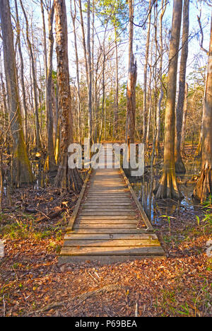 Boardwalk into a Bottomland Forest in Congaree National Park in South Carolina - Stock Photo
