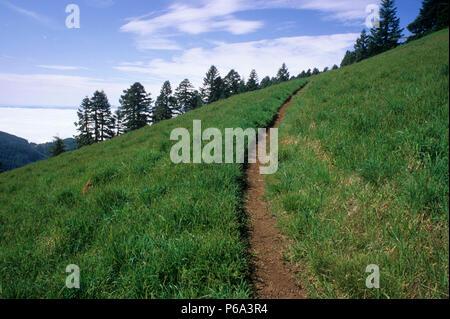 Summit Trail to Marys Peak, Marys Peak Botanical Area, Siuslaw National Forest, Oregon - Stock Photo