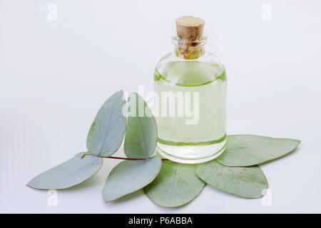 oil and eucalyptus leaves isolated on white background - Eucalyptus deglupta - Stock Photo