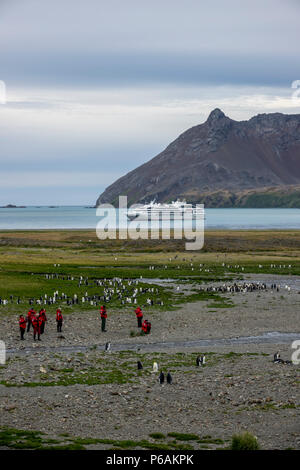 Expedition cruise ship passengers and King Penguins in front of  Le Lyrial at Fortuna Bay, South Georgia Island - Stock Photo