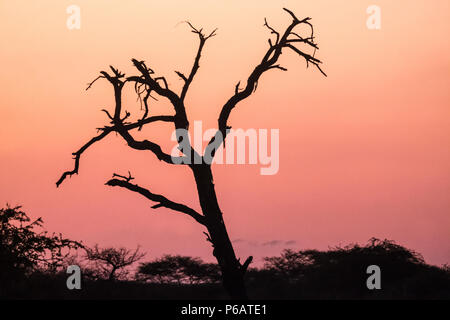 Sunset in the Onguma private game reserve along the western edge of the Etosha National Park, Namibia - Stock Photo