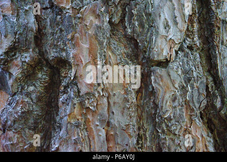 background, material, fir bark in close-up - Stock Photo