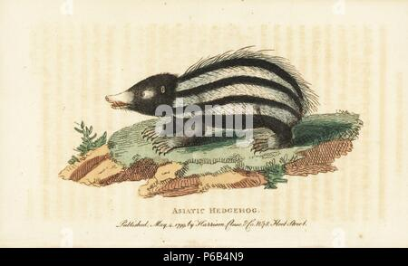 Lowland streaked tenrec, Hemicentetes semispinosus, native to Madagascar. (Asiatic hedgehog, Erinaceus setosus) Illustration copied from Thomas Pennant. Handcoloured copperplate engraving from 'The Naturalist's Pocket Magazine,' Harrison, London, 1799. - Stock Photo