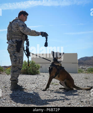 Staff Sgt. Ryne Wilson, a 99th Security Forces Squadron military working dog handler, rewards his MWD, Seneca, for her exceptional work during a training exercise at Nellis Air Force Base, Nev., April 26, 2018. The exercise helped handlers better understand their military working dogs. (U.S. Air Force photo by Airman Bailee A. Darbasie) - Stock Photo