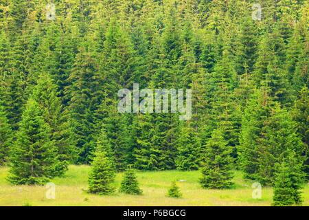 Forest landscape in Gorski Kotar area, Croatia - Stock Photo