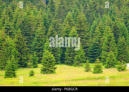 Forest landscape in Gorski Kotar area, Croatia - Stock Photo