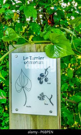 France, Lot, Causses du Quercy regional natural park, Padirac region, sign descripting black bryony in Bonnefont marsh - Stock Photo