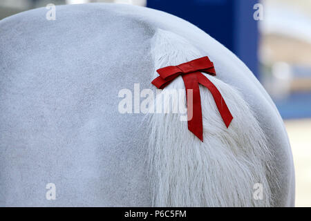 Doha, red bow in the tail of a horse - Stock Photo