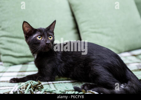 The black kitten with big yellow eyes sits on a green sofa - Stock Photo