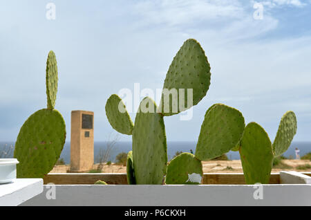 Close-up of cultivated cactuses in a row against blue cloudy sky and Mediterranean Sea. Spain - Stock Photo