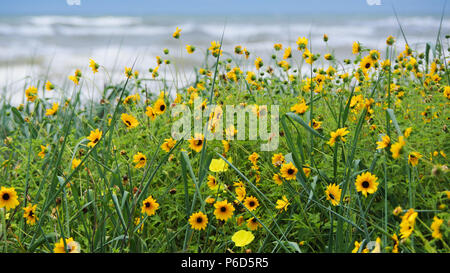 Yellow Wild Flowers Growing on Beach Dune with Blue Sky and Waves in Background - Stock Photo