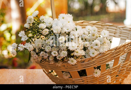 Asters white flowers in a basket on wooden table - Stock Photo