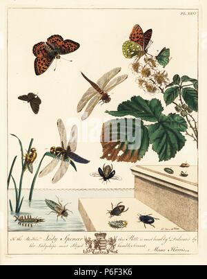 Green hairstreak butterfly, Callophrys rubi, dark green fritillary, Argynnis aglaia, black oval or lesser silver water beetle, Hydrocharis caraboides, and flat blue-tailed dragonfly or broad-bodied chaser, Libellula depressa, on brambles, Rubus fruticosus. Handcoloured lithograph after an illustration by Moses Harris from 'The Aurelian; a Natural History of English Moths and Butterflies,' new edition edited by J. O. Westwood, published by Henry Bohn, London, 1840. - Stock Photo