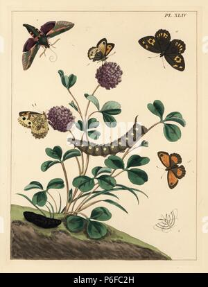 Spurge hawk-moth, Hyles euphorbiae, grayling, Hipparchia semele, gatekeeper, Pyronia tithonus, and common white wave, Cabera pusaria. Handcoloured lithograph after an illustration by Moses Harris from 'The Aurelian; a Natural History of English Moths and Butterflies,' new edition edited by J. O. Westwood, published by Henry Bohn, London, 1840. - Stock Photo
