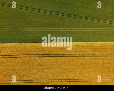 Aerial photography of a wheat field in green and golden colors with long parallel  patterns - Stock Photo